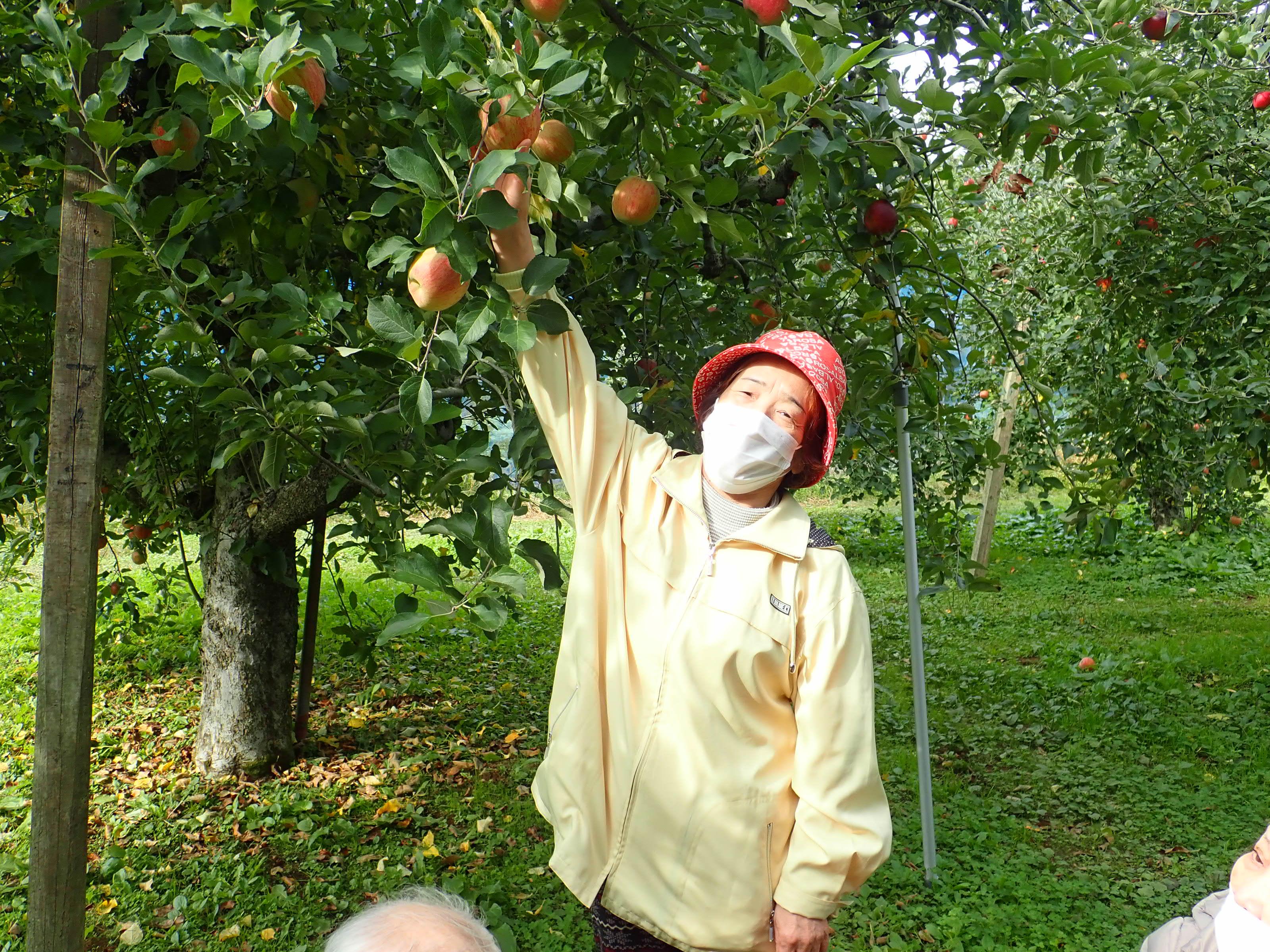 リンゴ狩りでの一コマ